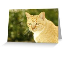 Green Eyed Aly Greeting Card
