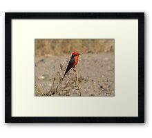 Vermilion Flycatcher ~ Male Framed Print