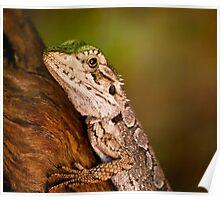 """Dragon Lizard"" Poster"