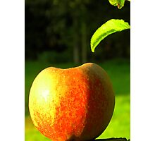 Apple in the Sun Photographic Print