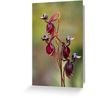 Duck Orchids Greeting Card