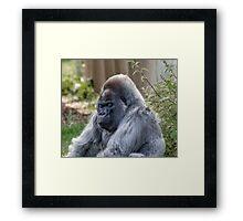 Gorilla Sleeping Framed Print