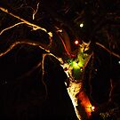An Australian Christmas Tree by Jevita