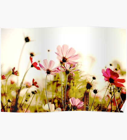 Delicate: Sold Feb 28,2011+SOLD 2014: On Featured: Natural-color-and-light Group Poster