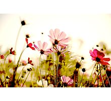 Delicate: Sold Feb 28,2011+SOLD 2014: On Featured: Natural-color-and-light Group Photographic Print