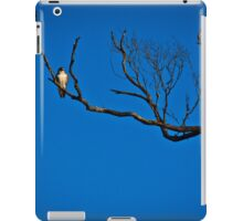 Brown Falcon at Roost iPad Case/Skin