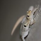 Doing the gecko Dance by Cathie Trimble