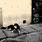 The Streets of Florence II by Leni Kae