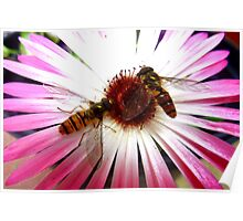 hoverflies in summer Poster