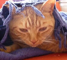 ginger cat under a throw by rkdownton