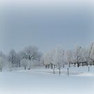 Snow Trees All In A Row by Linda Miller Gesualdo