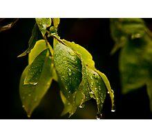 Freshness Photographic Print