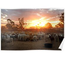 Cattle Yards North Queensland Poster
