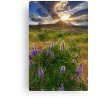 awaking lupins Canvas Print