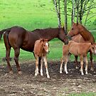 Mothers and Foals by AnnDixon