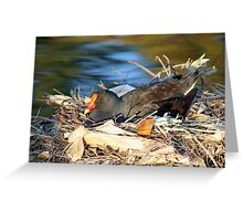 Swamp Hen on Nest Greeting Card