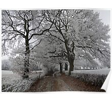 Frosty oak tree lane Poster