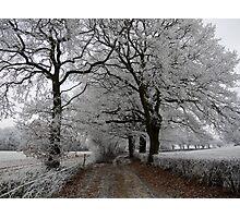 Frosty oak tree lane Photographic Print