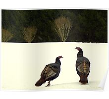 Fine Feathered Friends... Poster