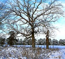 Winter Oak by JGetsinger