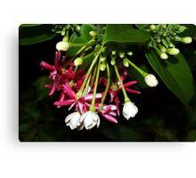 Flowers on a tropical vine Canvas Print