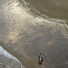 Horse riders on the beach by fatty-arbuckle