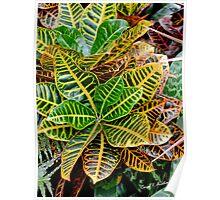Cadiaeum Crotons Tropical Houseplant Poster