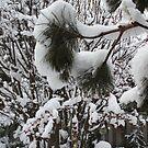Winter wonderland by eoconnor