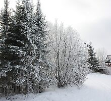 The Quiet of Snow by eoconnor