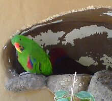 Green Parrot in Wall by evissaboutique