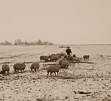 Farmer with sheep by Willem Hoekstra