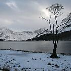In the grip of Winter by Peter  Thomas