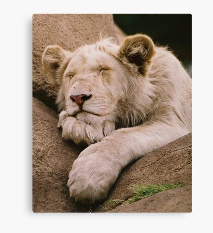 Snooze Time Canvas Print