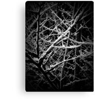 The Wood for the Trees Canvas Print