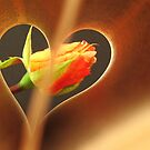 Heart by mrvica