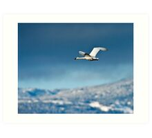 Into The Blue Yonder Art Print