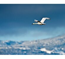 Into The Blue Yonder Photographic Print