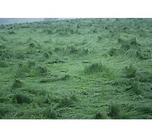 Whirlwind Grass Photographic Print