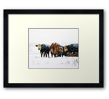 Cattle in Snowstorm 078 Framed Print