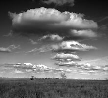 Clouds in the Everglades BW 0009 by Randall Nyhof