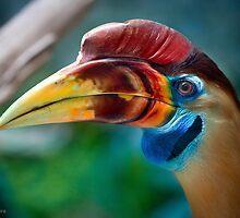 My new favorite bird in profile by alan shapiro