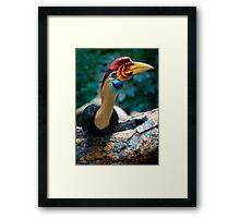 My new favorite bird posing for me Framed Print