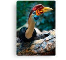 My new favorite bird posing for me Canvas Print