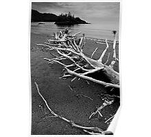 Driftwood Beach Poster