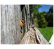 Side Fence - Lilydale Tasmania Poster