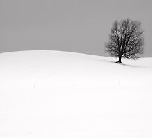 Lone Tree in Winter by Randall Nyhof