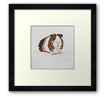 Swift Art, Guinea pig Framed Print