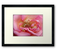Rose Centre Framed Print