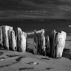 Shore Pilings on PEI by Randall Nyhof