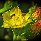 Cactus Flower by victor kilman